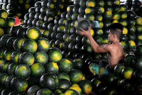 菲律宾人新年家中要摆12种圆水果 西瓜变身福果