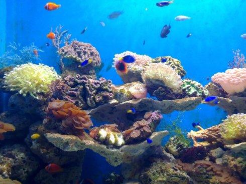 ACC Attended the World Ocean Week in Xiamen