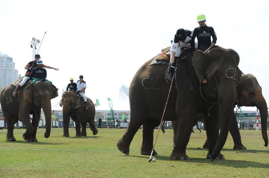 """泰國曼谷舉辦第15屆""""國王杯""""大象馬球賽"""